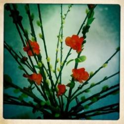 Hipsta-Flowers