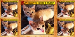 Say Hello To Rocco & Rudie 9